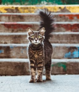 How To Become A Polymath - Image 4 of a lone cat looking straight at the camera with its tail up.